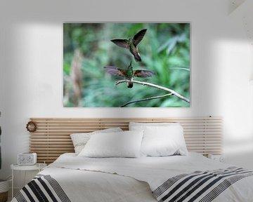 Kolibries van Antwan Janssen
