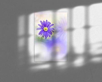 Himmlische Blumen von Bob Daalder