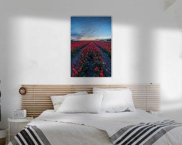 Rode tulpen van Thijs Friederich