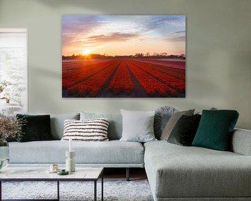 Rote Tulpen 2 von Thijs Friederich