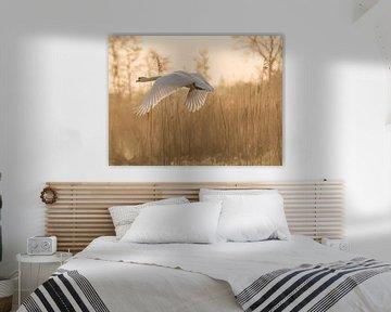 Flug eines Schwans von Karen de Geus