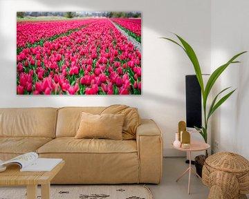 Schönes Tulpenfeld in der Farbe Rosa von Photography by Naomi.K