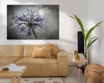 Schmucklilie mit Regentropfen von Annette Hanl