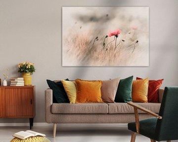 Zarte Mohnblume im Feld von Annette Hanl