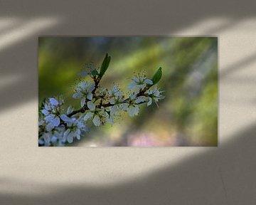 Blüte von PhotoJoy