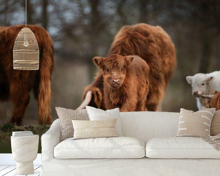 Sfeerimpressie behang: Schotse hooglander kalf met kudde op de achtergrond van Maarten Oerlemans