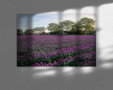 Lila Tulpen von Barbara Brolsma
