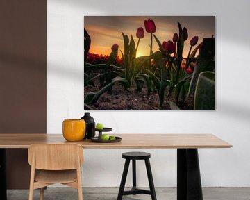 Tulpenfeld und Sonnenaufgang von Claudia De Vries
