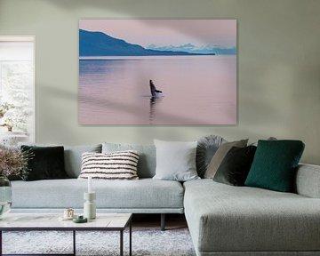 Bultrug walvis in de middernachtzon van Denis Feiner