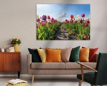 Tulpen und die Wolke von Robin van Maanen