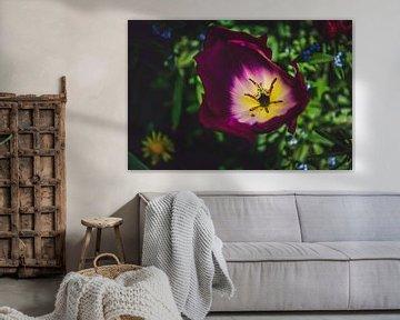 Tulpe von oben von Photography by Naomi.K