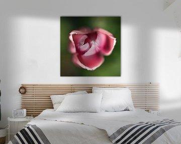 Tulpe von A.M. de Jong