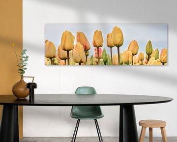 de kleur geel als bloeiende tulp
