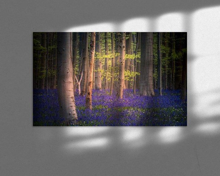 Sfeerimpressie: Blue carpet van Wim van D