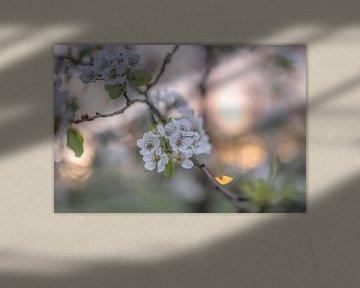 Blumen Teil 118 von Tania Perneel
