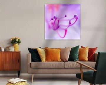 Pretty in Pink von A.M. de Jong
