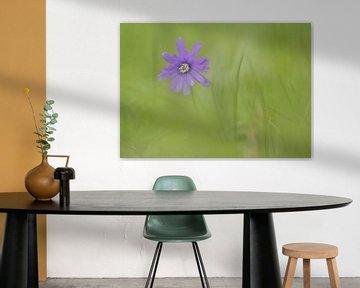 Blaue Anemone von Connie de Graaf