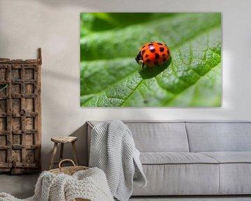 Mooi lieveheersbeestje op een blad van Photography by Naomi.K