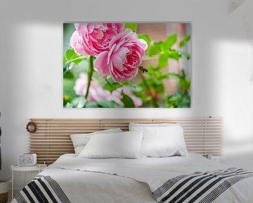 Rosa Rose Blume mit einer Hummel von Photography by Naomi.K
