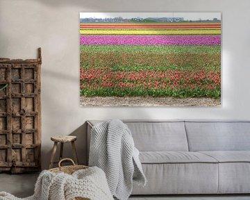 Tulpen von Erik Reijnders