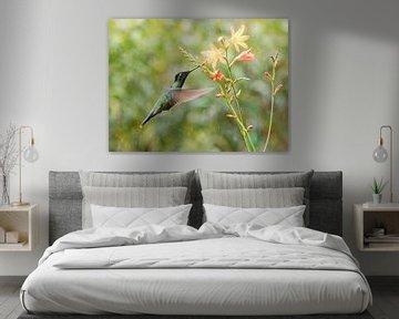Talamanca-Kolibri mit orangefarbenen Blüten von RobJansenphotography