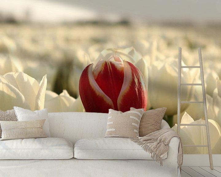 Beispiel fototapete: Die rote Tulpe von William Visser