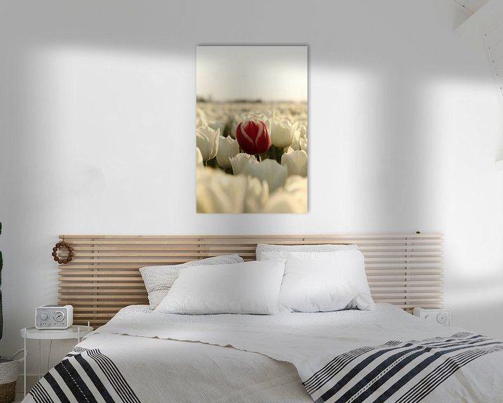 Beispiel: Die rote Tulpe von William Visser