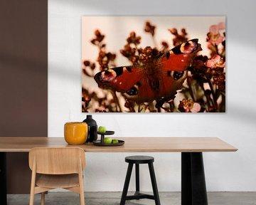 Tagpfauenauge Schmetterling von Saskia Schotanus