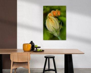 Zucchini Blume von Klaartje Majoor