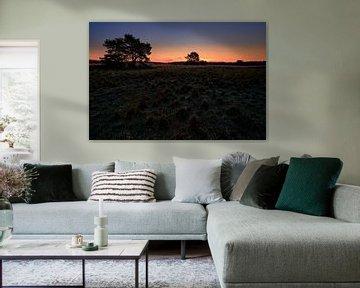 Sonnenaufgang in der Elspeetseer Heide von Jenco van Zalk