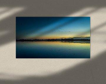 Migration des oiseaux 2