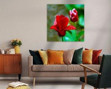 Tulpen in de regen van Jeannine Van den Boer
