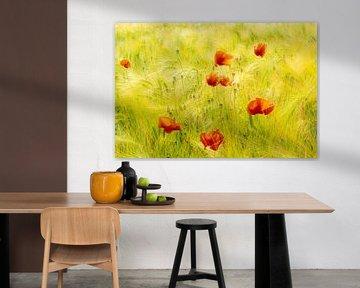 Beauté des coquelicots fleuris dans un champ de maïs mûr sur Dieter Walther