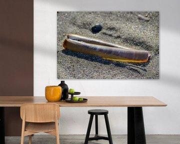 Muschel am Strand von Willem Holle WHOriginal Fotografie