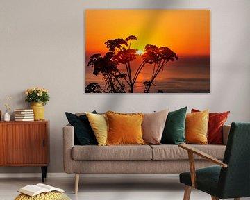 Pflanzensilhouette im Sonnenuntergang am Meer