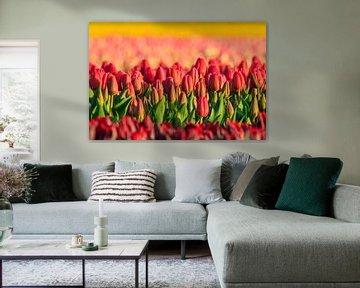 Rode tulpen met gele achtergrond