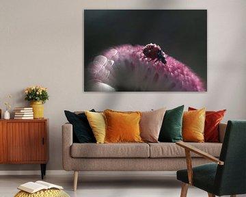 Lieveheersbeestje op een roze madeliefje, met veel bokeh van Anne Ponsen