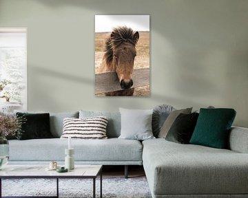 Portret Van Een Bruin Paard van Henrike Schenk