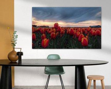 Tulpe(n) von Anne van der Valk