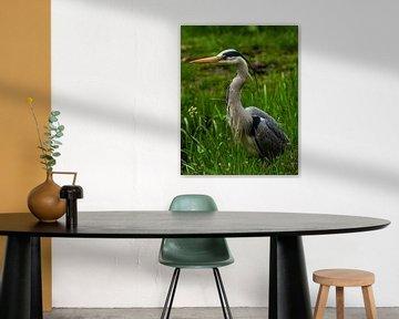 Reiher: Porträt eines Reihers im Gras von Marjolein van Middelkoop