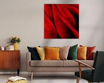 Rote Rosenblätter von sarp demirel