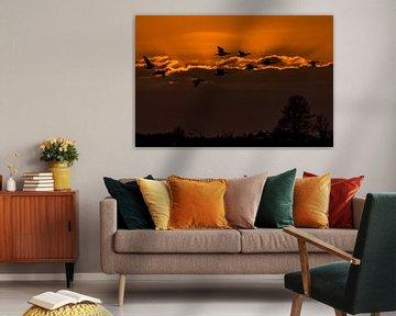 Brandganzen met ondergaande zon (NL) van Paul van der Zwan