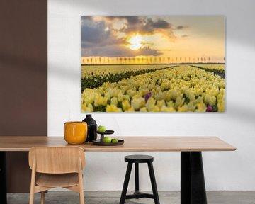 Gelbe Tulpen bei Sonnenaufgang von Rossum-Fotografie