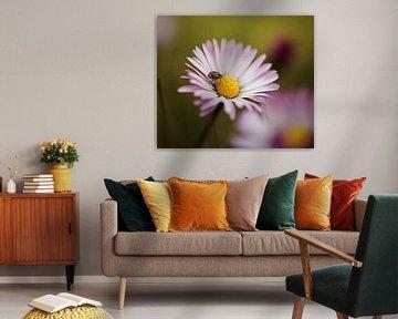 Big world van Pink Rose Pictures