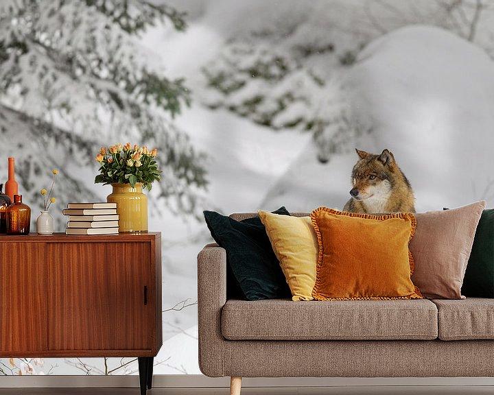 Beispiel fototapete: Wolf (Canis lupus) von Dirk Rüter