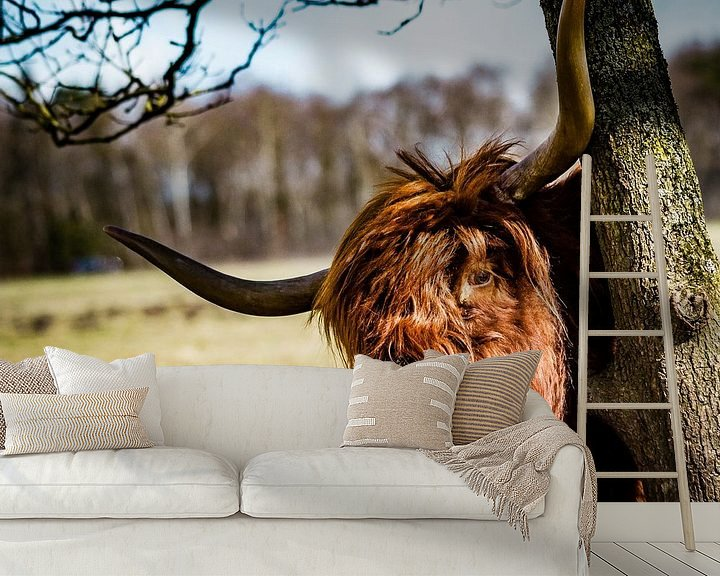 Sfeerimpressie behang: Goedemorgen Highlander van Meint Brookman
