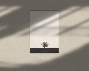 Baum im Scherenschnitt von Denis Feiner