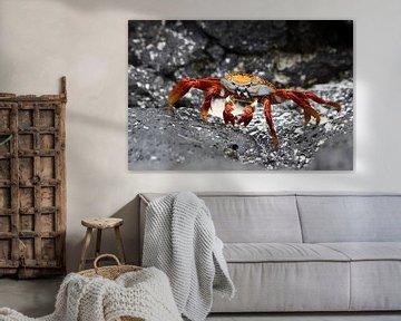 Sally Lightfood crab van Antwan Janssen