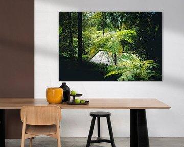Dschungel auf Madeira von jonathan Le Blanc