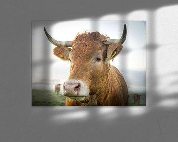 Koe van Dirk van Egmond